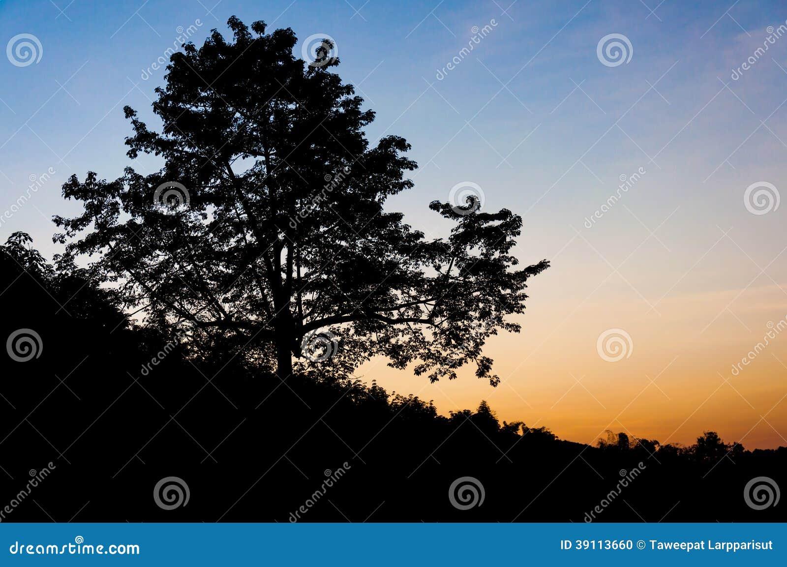 Silhouetboom in schemering