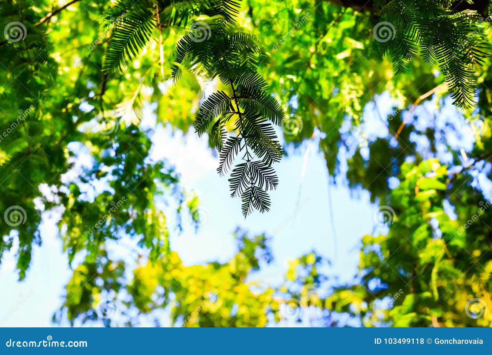 Silhouette тропические заводы на голубом небе, зеленые листья папоротника в тропиках Лето и праздник концепции леса естественной