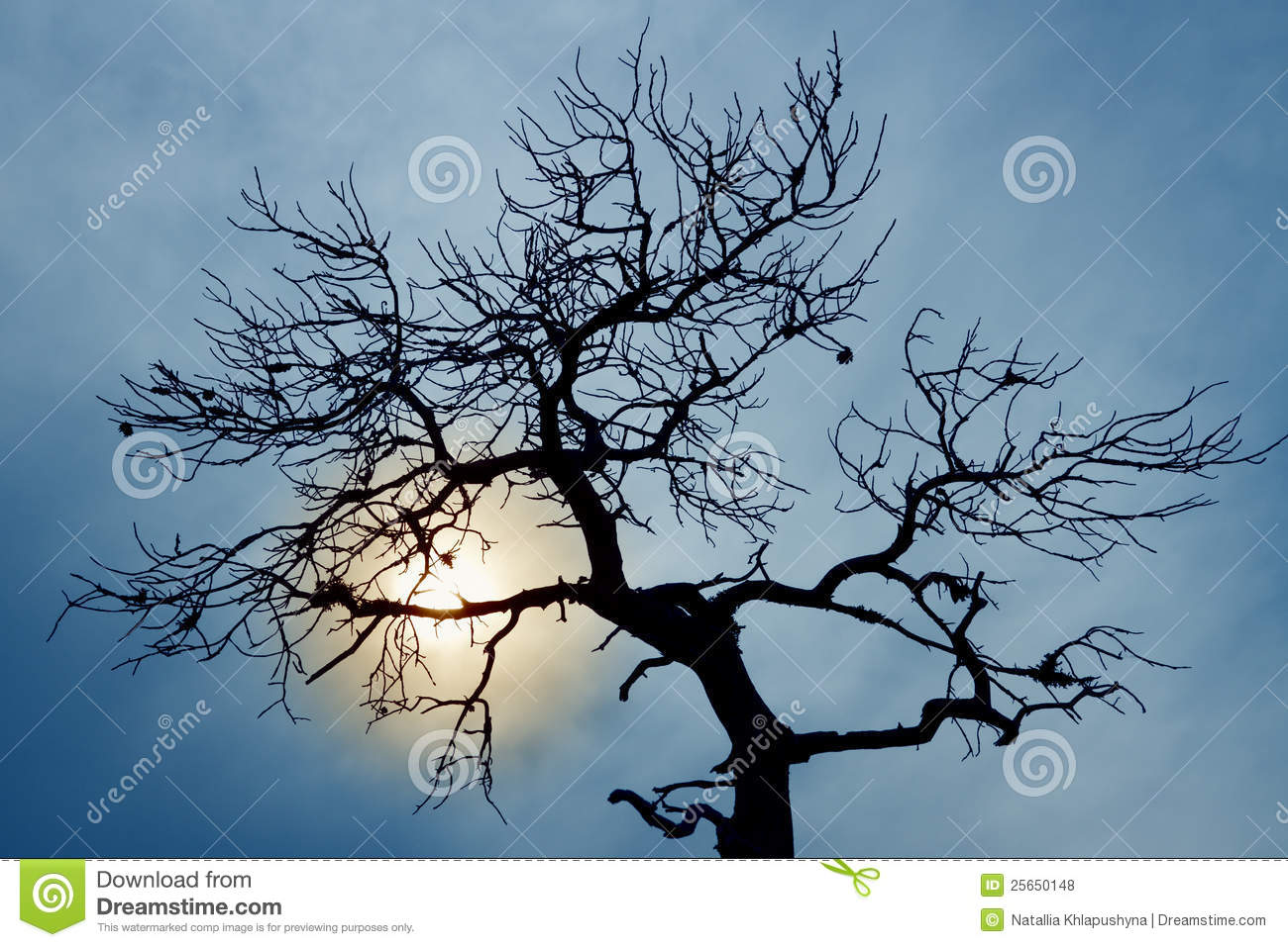 Silhouette Of Bare Tree Royalty Free Stock Photos - Image: 25650148