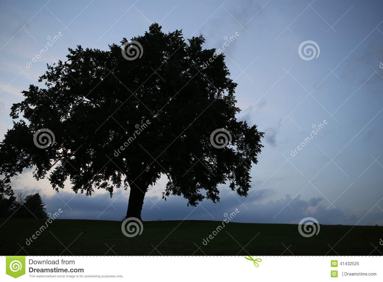 Silhouette of a beautiful tree