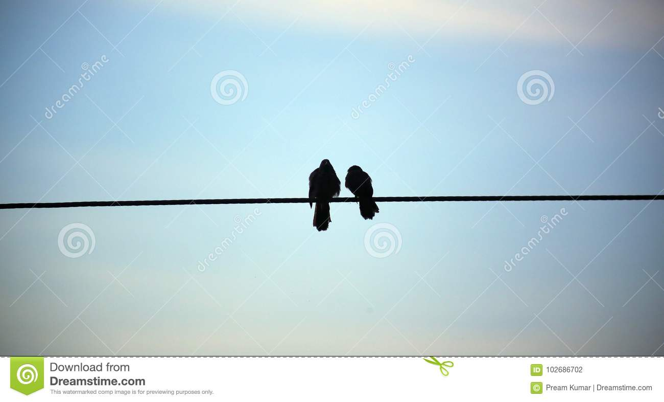 Silhouette Of Bird On The Electric Wire Cable On Blue Background ...