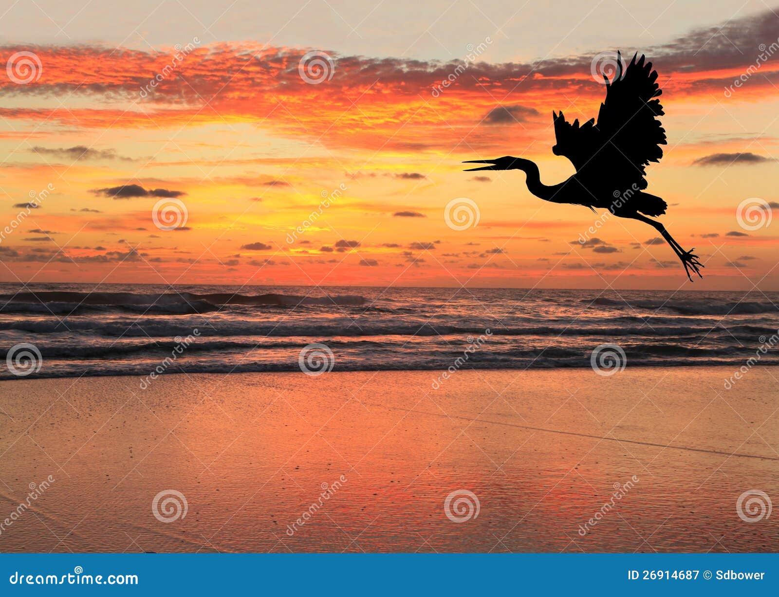 sunrise beach online dating Sunrise beach, mo --the sunrise beach, mo fire department identified the man killed in a house fire on july 4joseph anthony menzel, 52, of sunrise beach died in the fire.