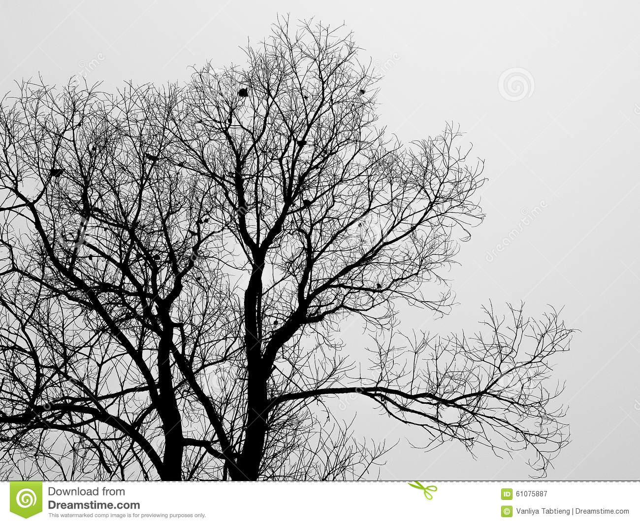 Silhouette branch of bald tree in the white fog in winter