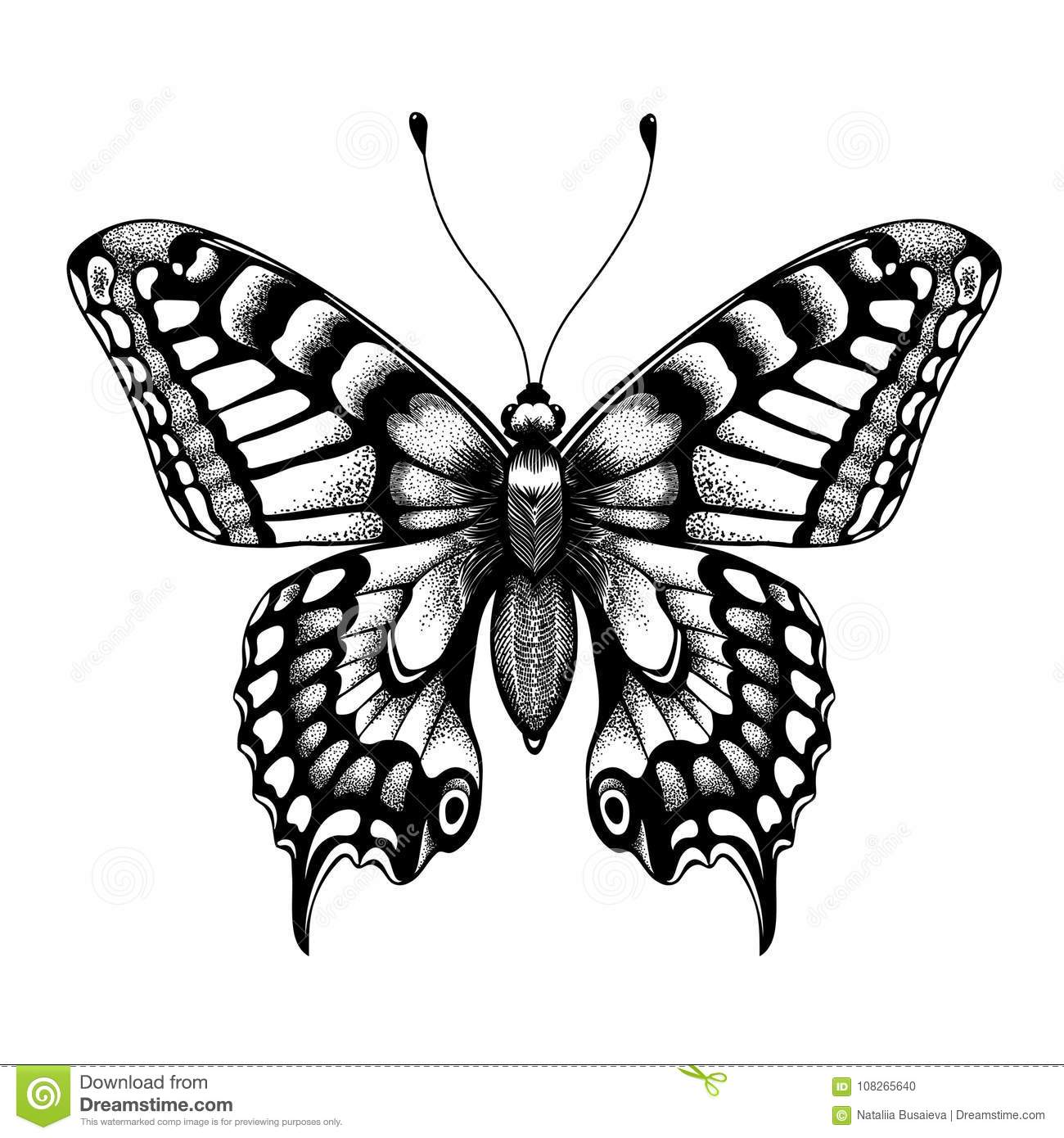3a97572aa24de Silhouette of butterfly. Tattoo butterfly. Isolated vector sketch of  butterfly.