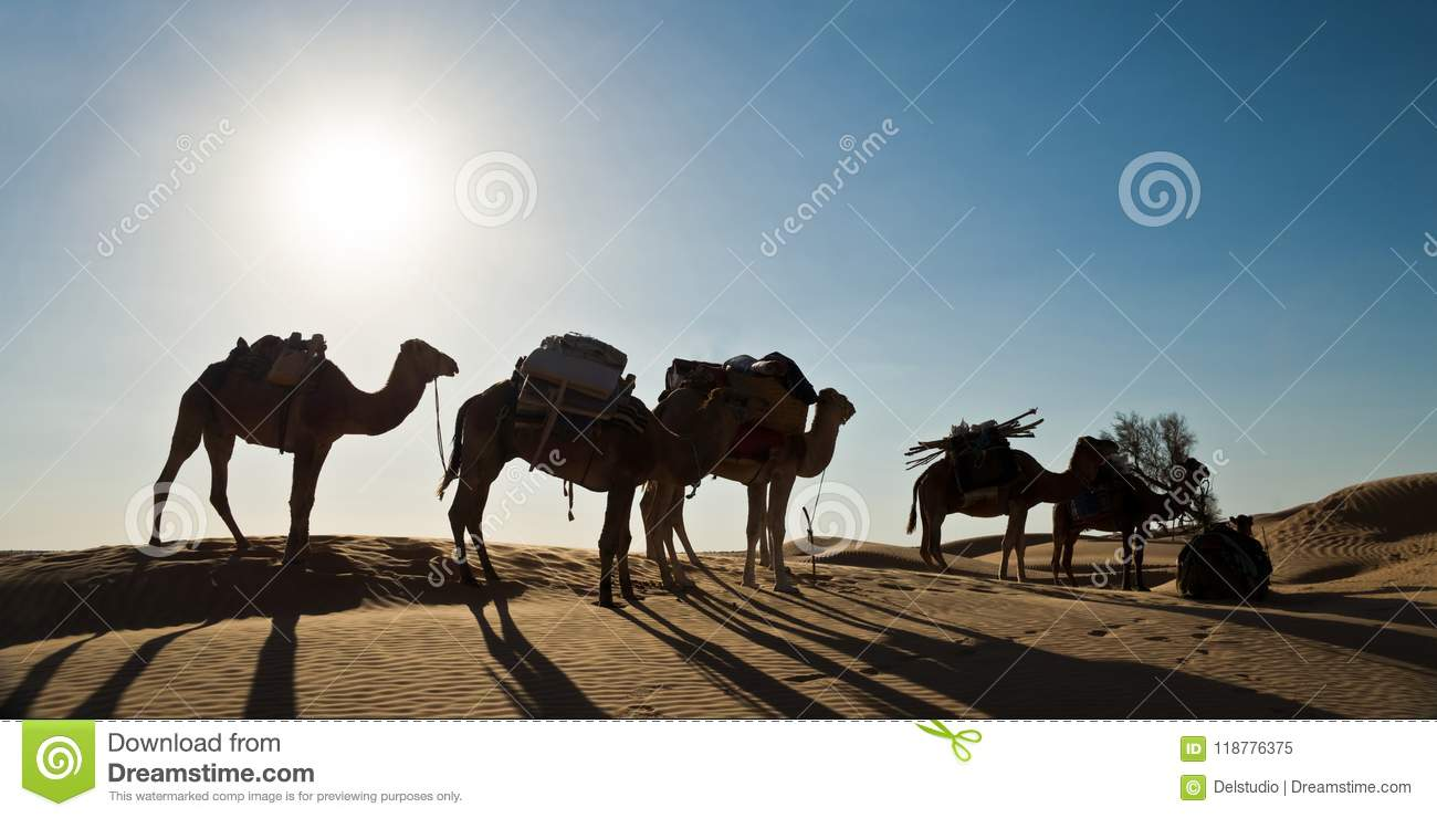 Silhouette of a caravan of camels in sand dunes - South Tunisia