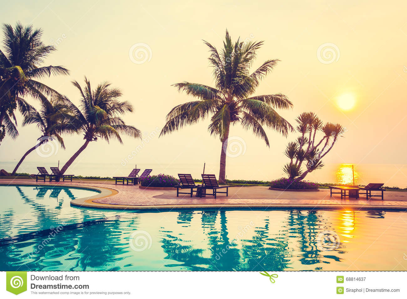 Silhouette Coconut Palm Tree With Swimming Pool Stock Image Image 68814637