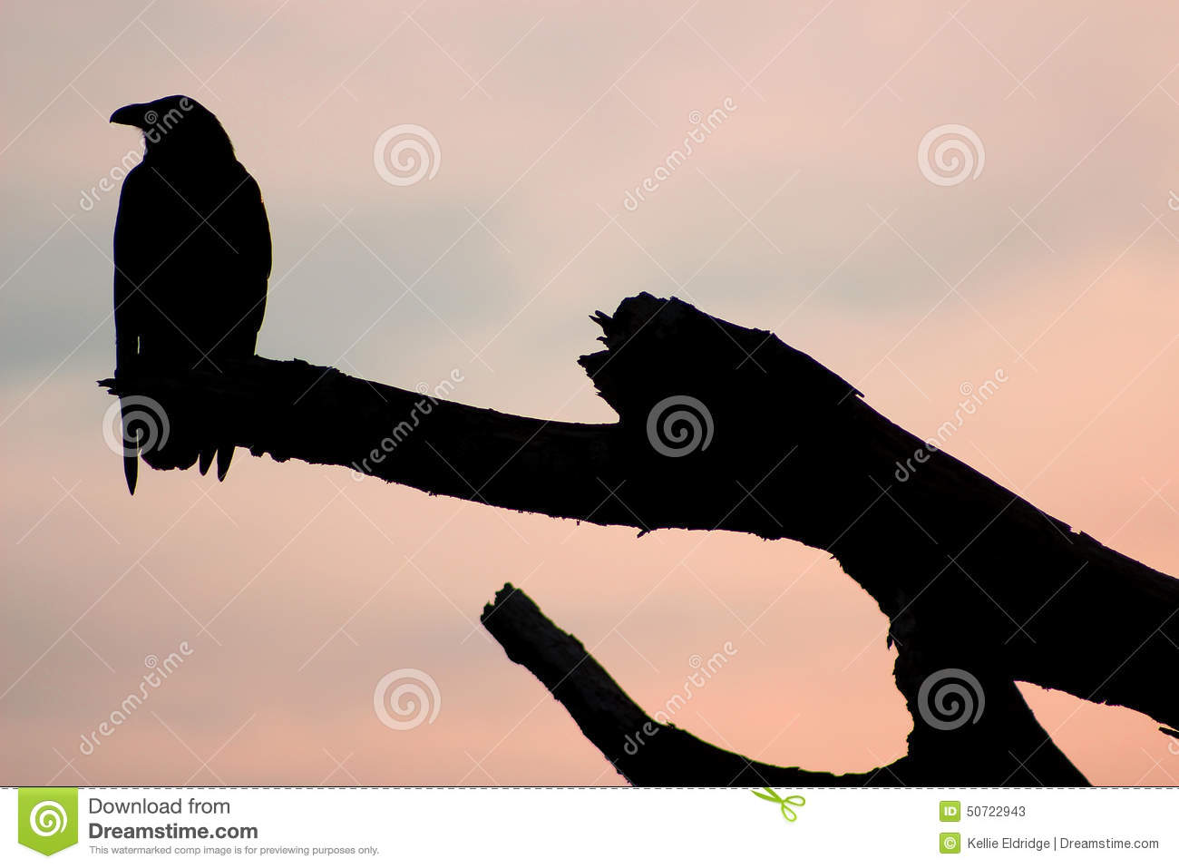 Silhouette Of A Crow Stock Photo - Image: 50722943