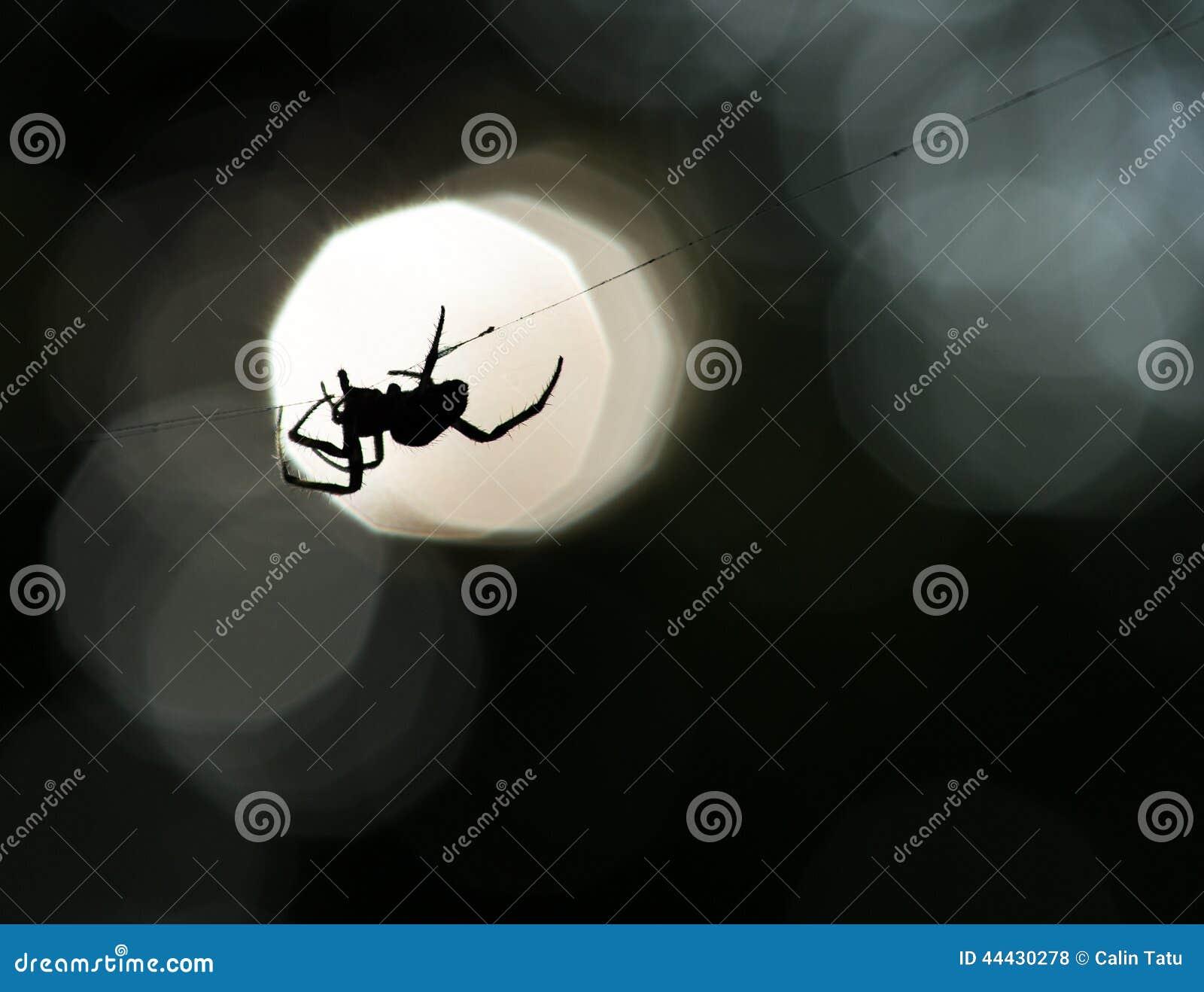 Silhouette d araignée sur un Web