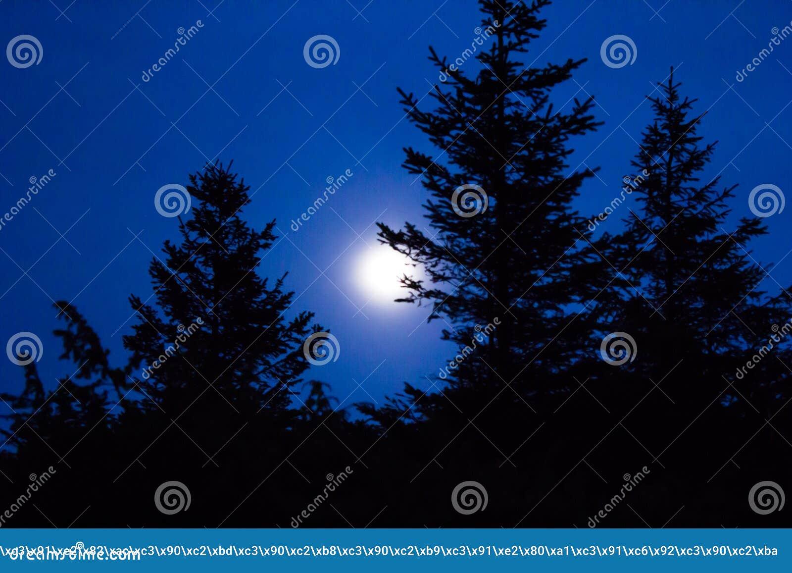 Download Silhouette D'arbre Contre Le Ciel Nocturne Et La Pleine Lune Image stock - Image du galaxie, côte: 63079907