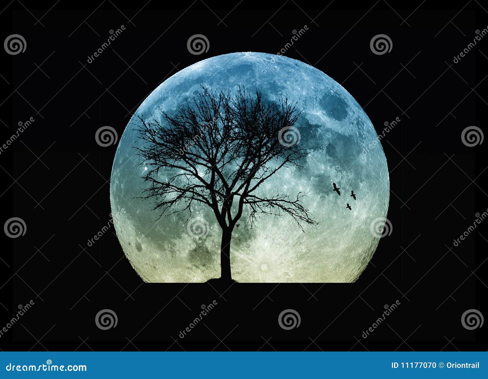 Silhouette d arbre et la lune