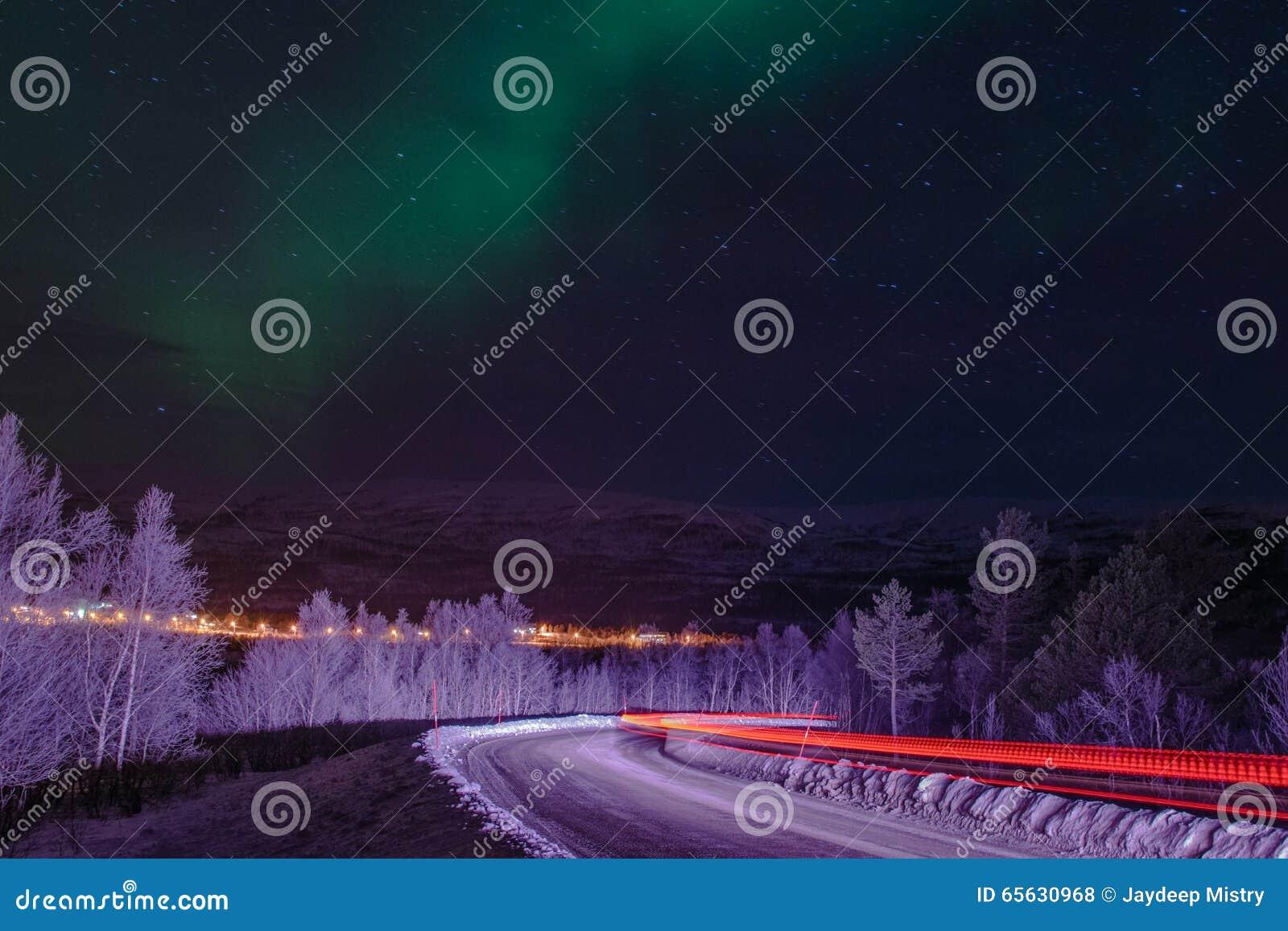 Silhouette d arbres de lumières du nord