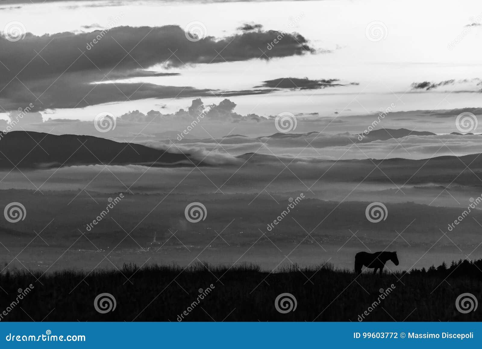 Silhouette d un cheval sur une montagne au crépuscule, avec une mer du brouillard i
