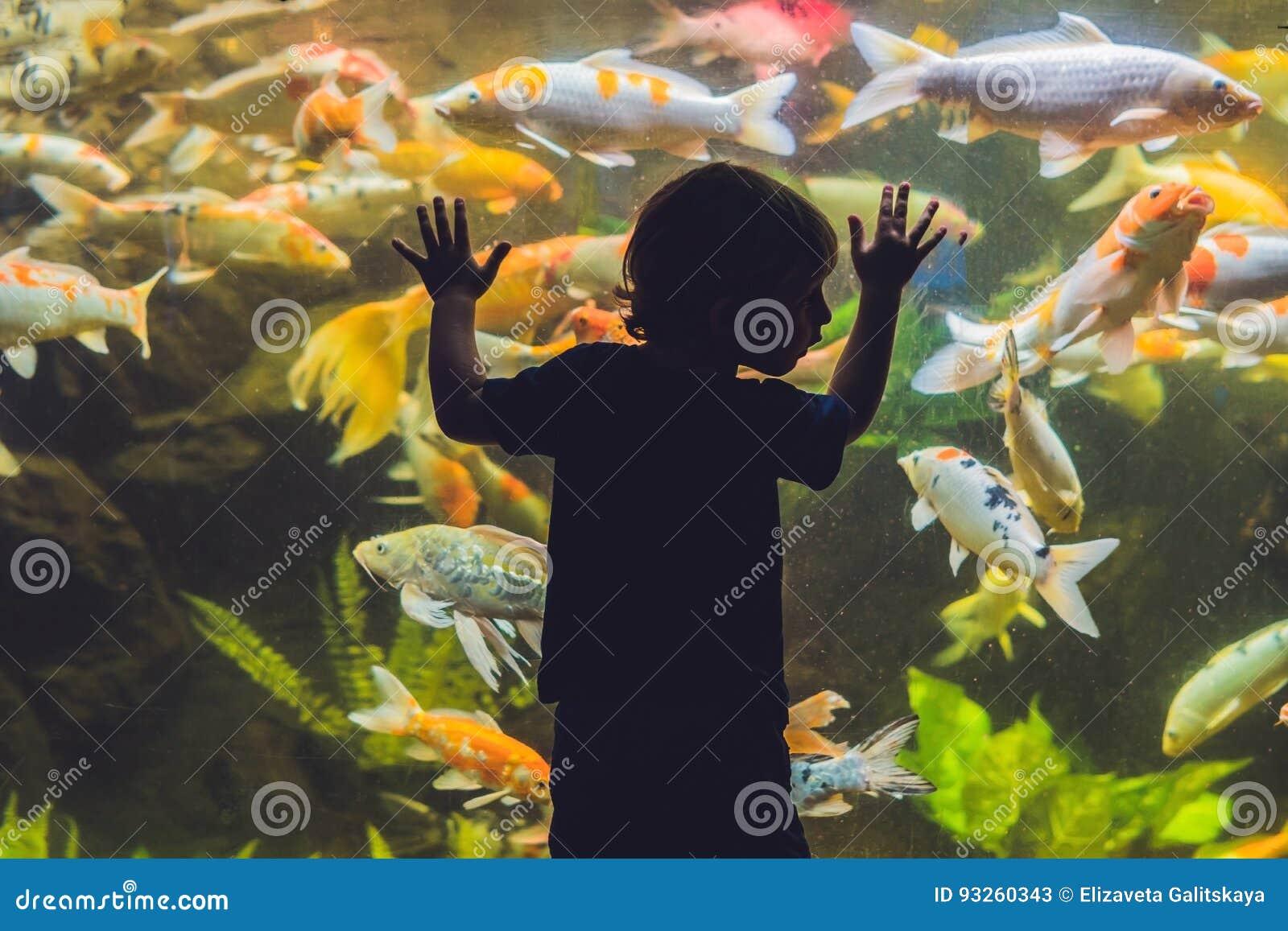 Silhouette d un garçon regardant des poissons dans l aquarium