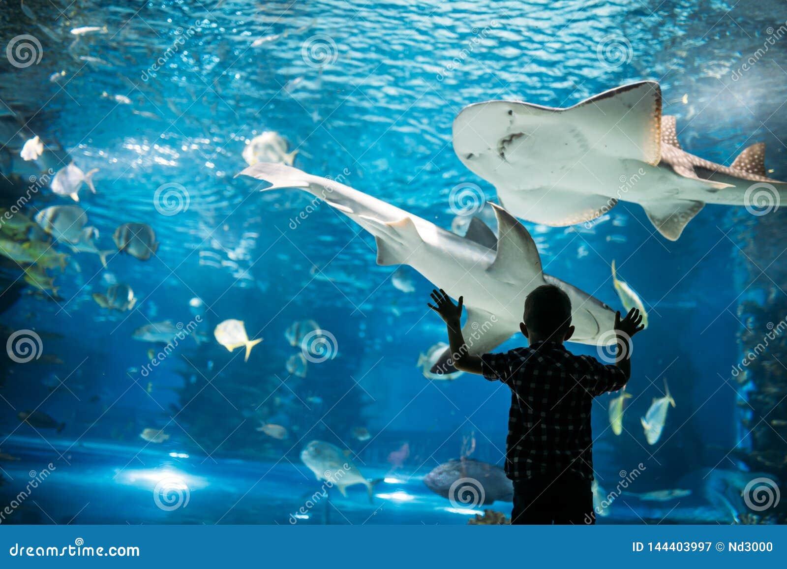 Silhouette d un gar?on regardant des poissons dans l aquarium