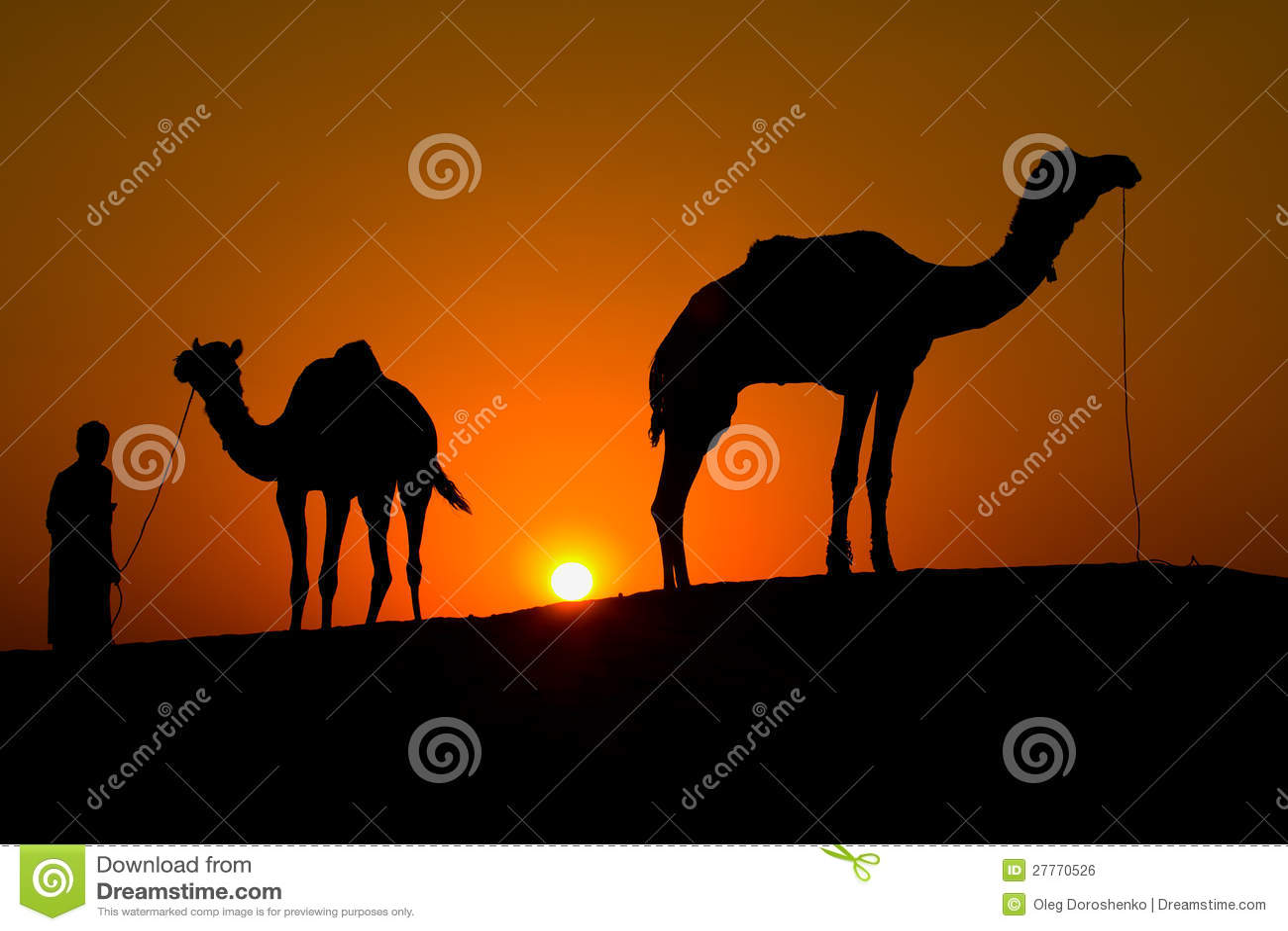 Silhouette d un homme et de deux chameaux