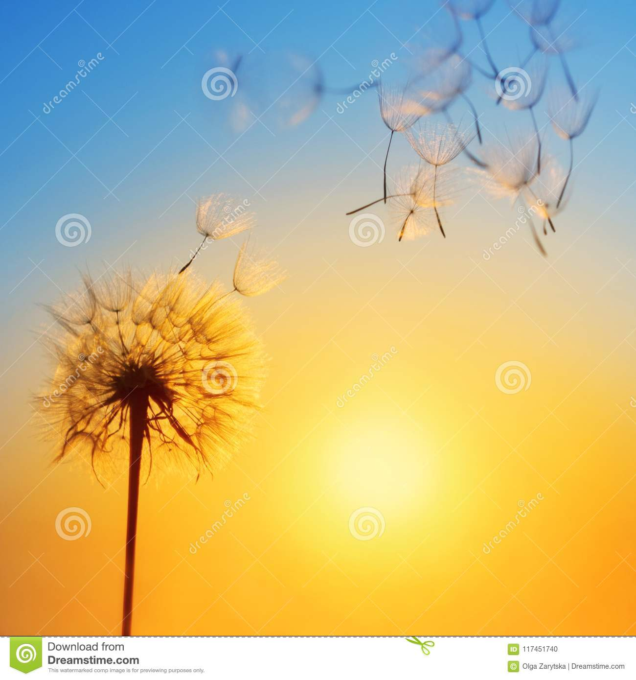 Silhouette of dandelion against the backdrop of the setting sun.
