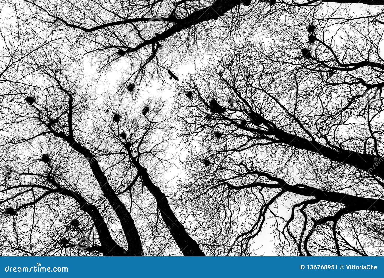 Silhouette of dark raven flying above bare trees