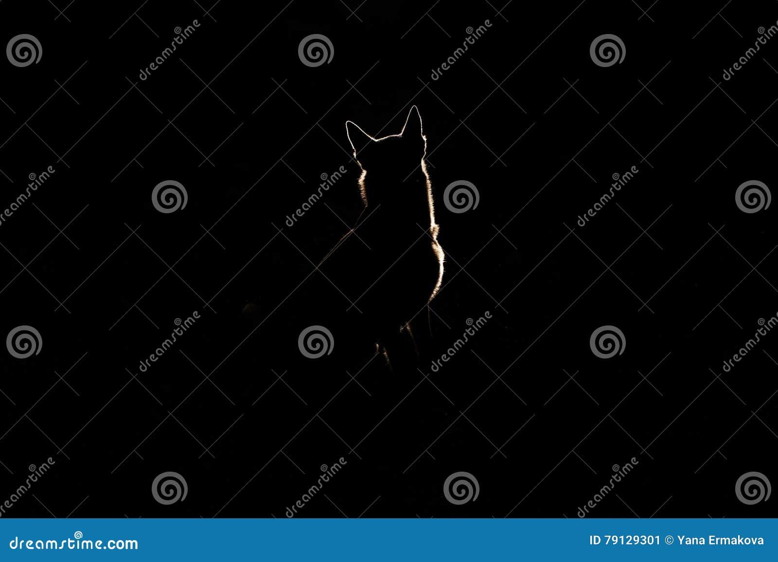 Silhouette de chien la nuit