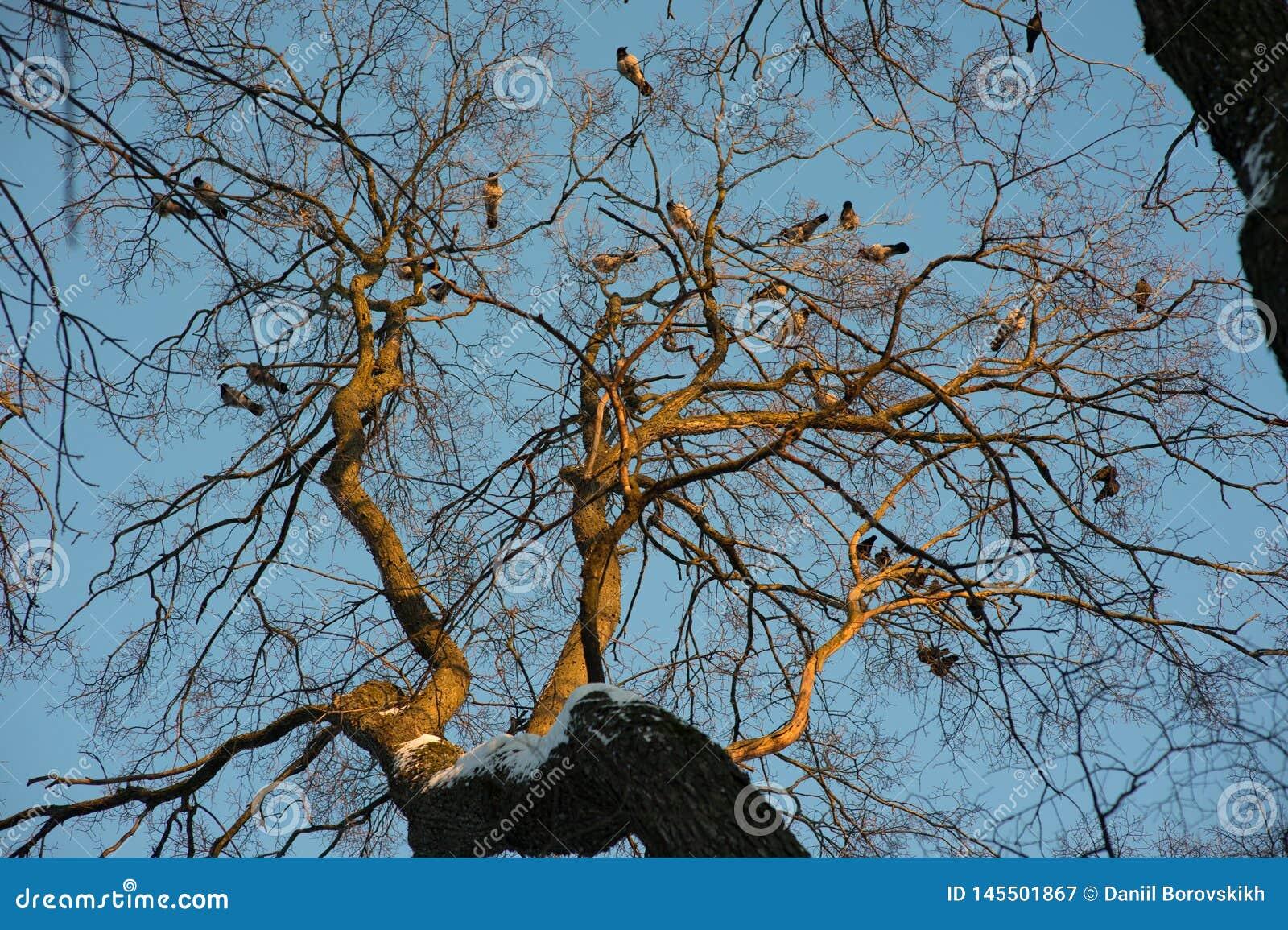 Silhouette de corbeau commun se reposant sur un arbre