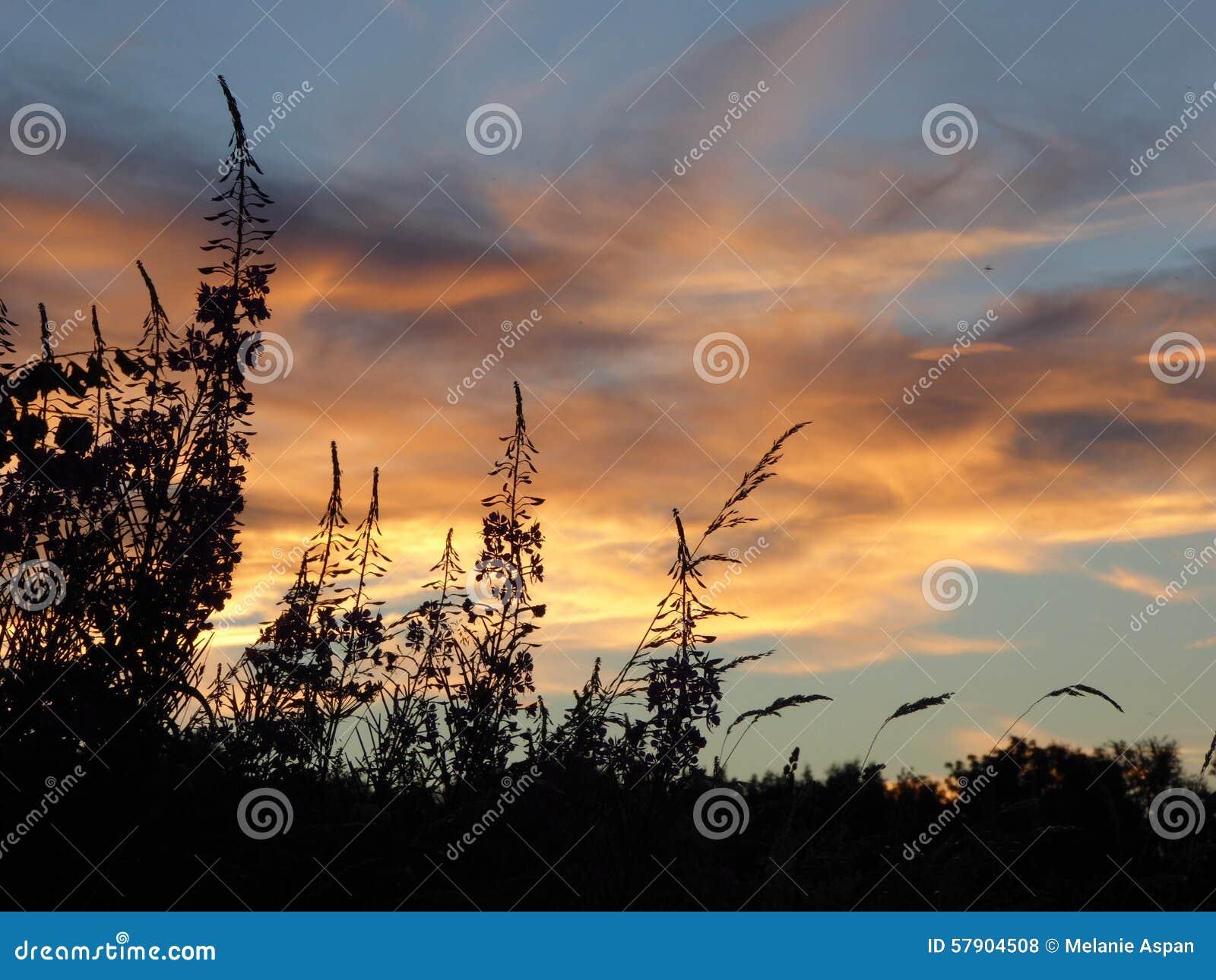 Silhouette de fleur de coucher du soleil photo stock image 57904508 - Fleur du soleil ...