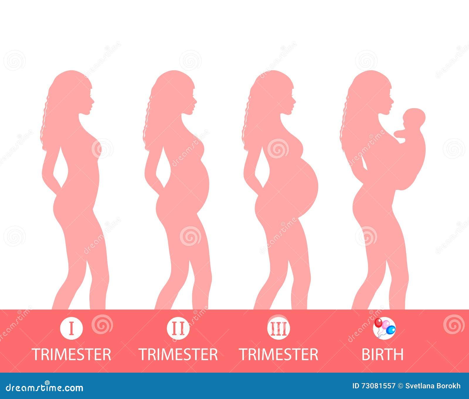 Silhouette de grossesse, étape de grossesse, trimestres, accouchement Illustration de vecteur