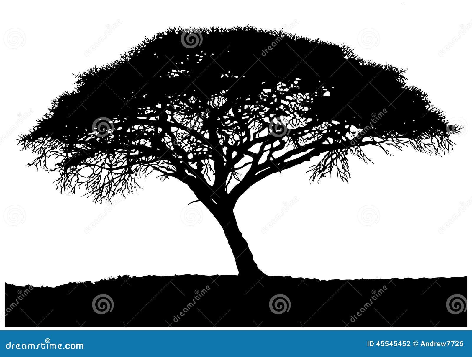 Silhouette de l 39 arbre africain photo stock image du herbe afrique 45545452 - Arbre africain en 7 lettres ...
