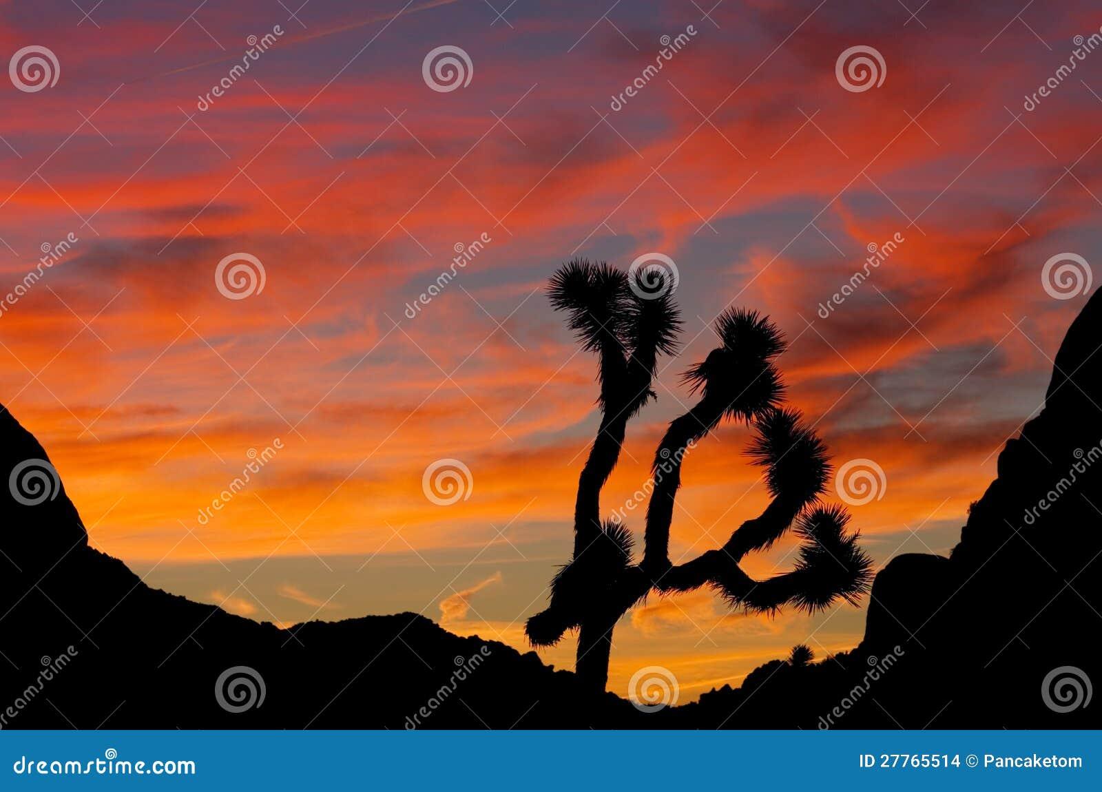 Silhouette de lever de soleil d arbre de Joshue