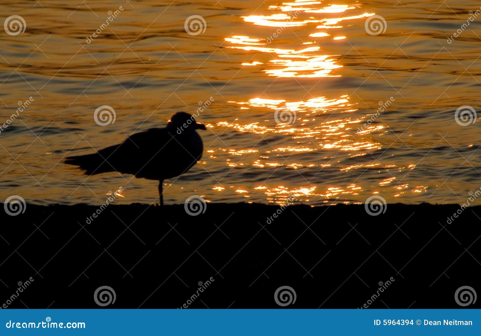 Silhouette de mouette au coucher du soleil