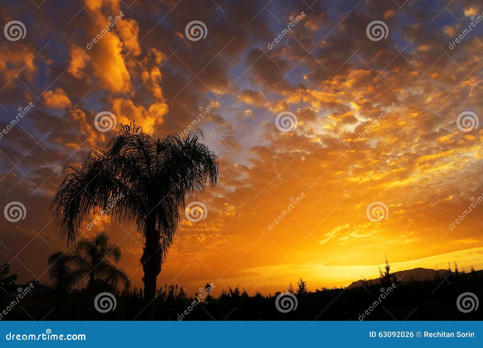 Download Silhouette De Palmier Sur La Plage Tropicale De Coucher Du Soleil Photo stock - Image du côte, horizon: 63092026