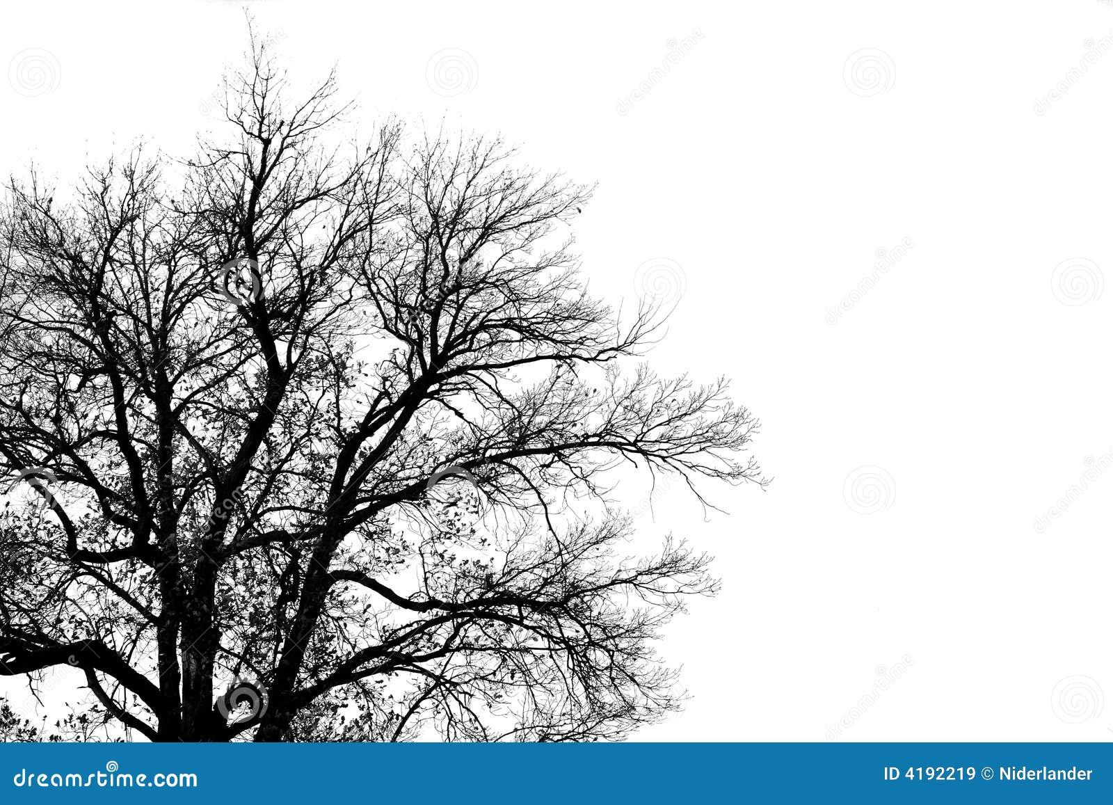 Silhouette de vieil arbre