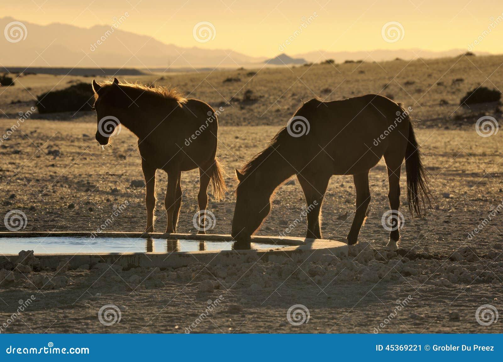 Silhouette des chevaux sauvages du boire de Namib