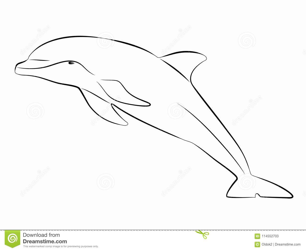 Silhouette Dolphin Vector Draw Stock Vector Illustration of image