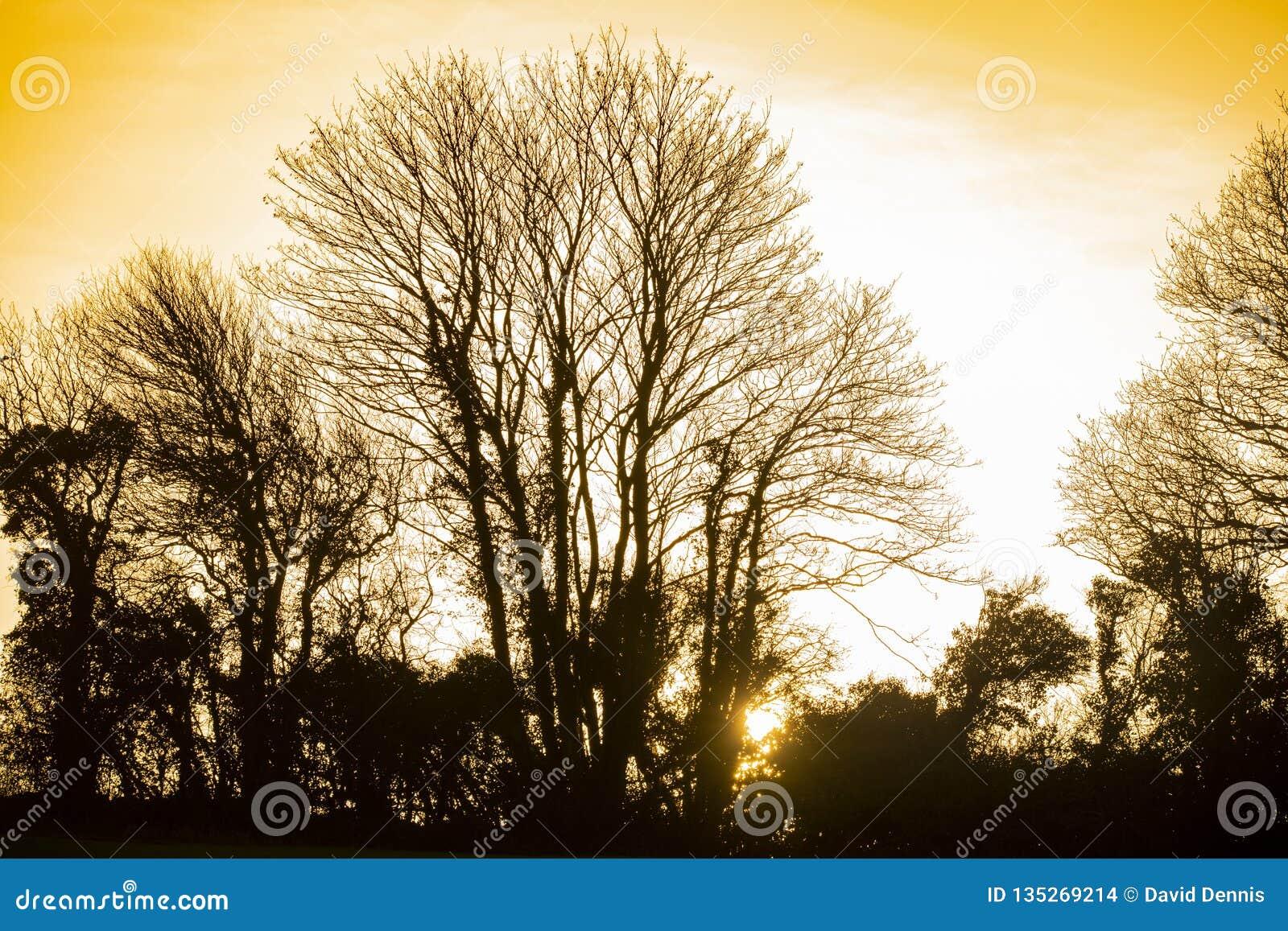 Silhouette et coucher de soleil d arbre d hiver dans les terres cultivables près de Bexhill à East Sussex, Angleterre