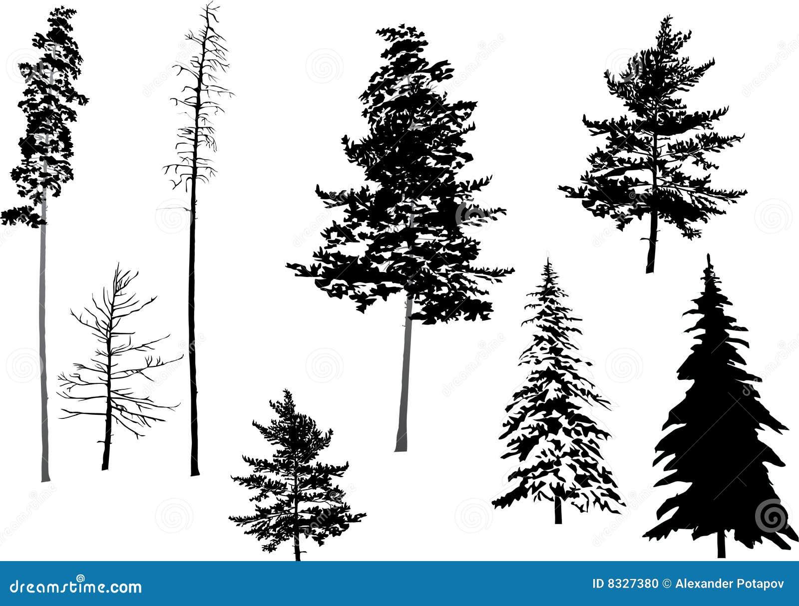 Silhouette Fir Set Stock Illustration Illustration Of