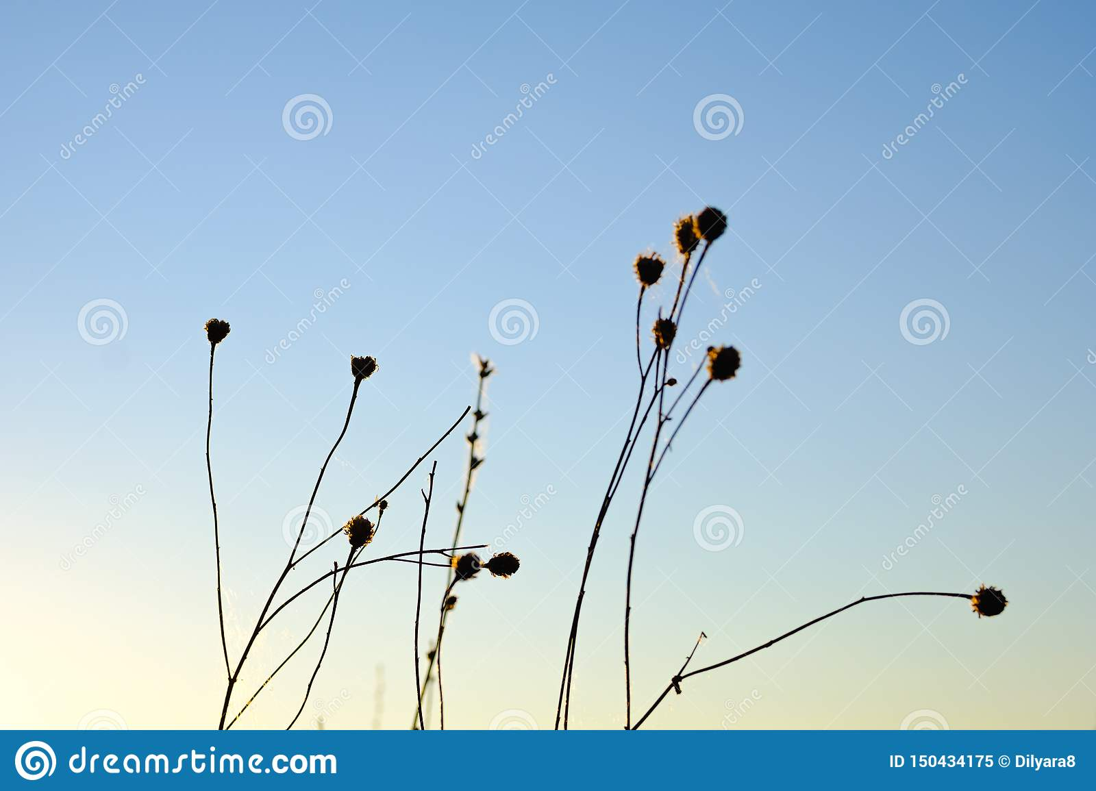Silhouette of flowers