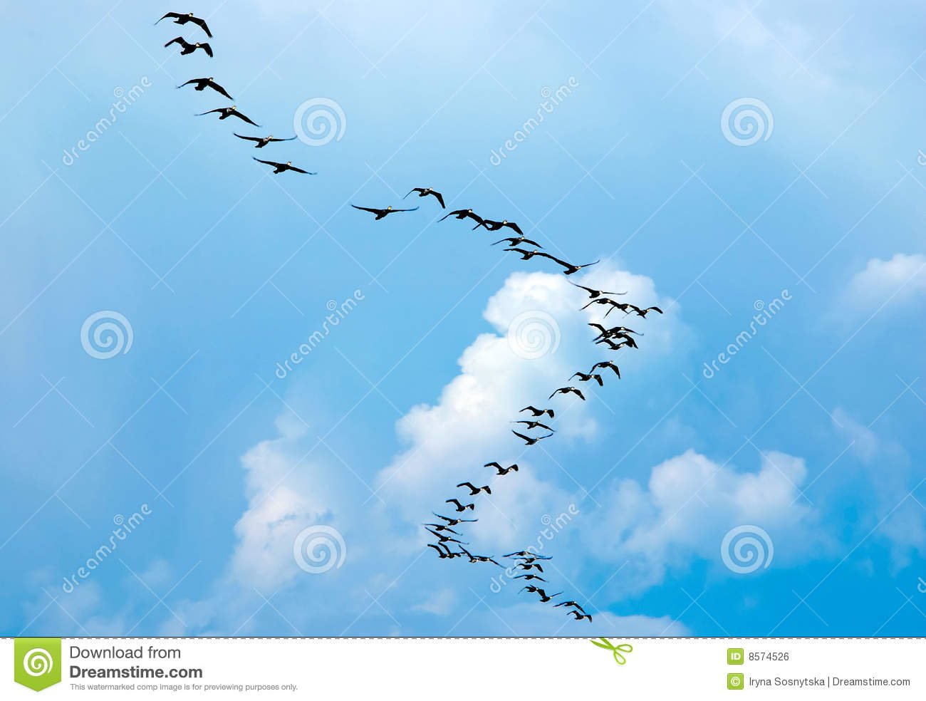Flying Birds Free Stock Photos Download 3 416 Free Stock: Silhouette Of Flying Birds Royalty Free Stock Image
