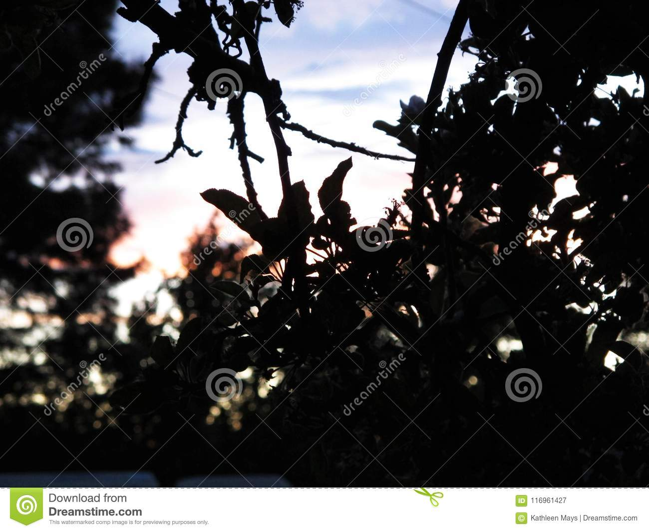 Foliage Silhouette with Stained Dusk Sky