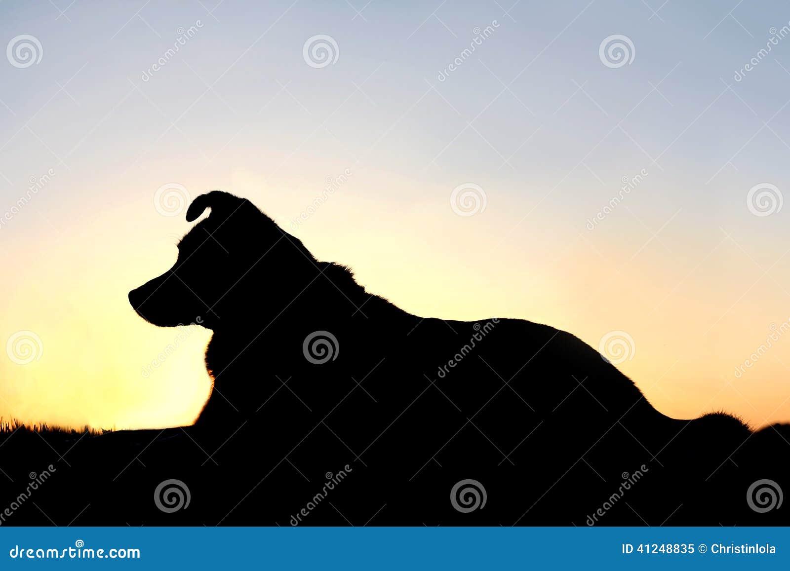 Sky Dog Breed