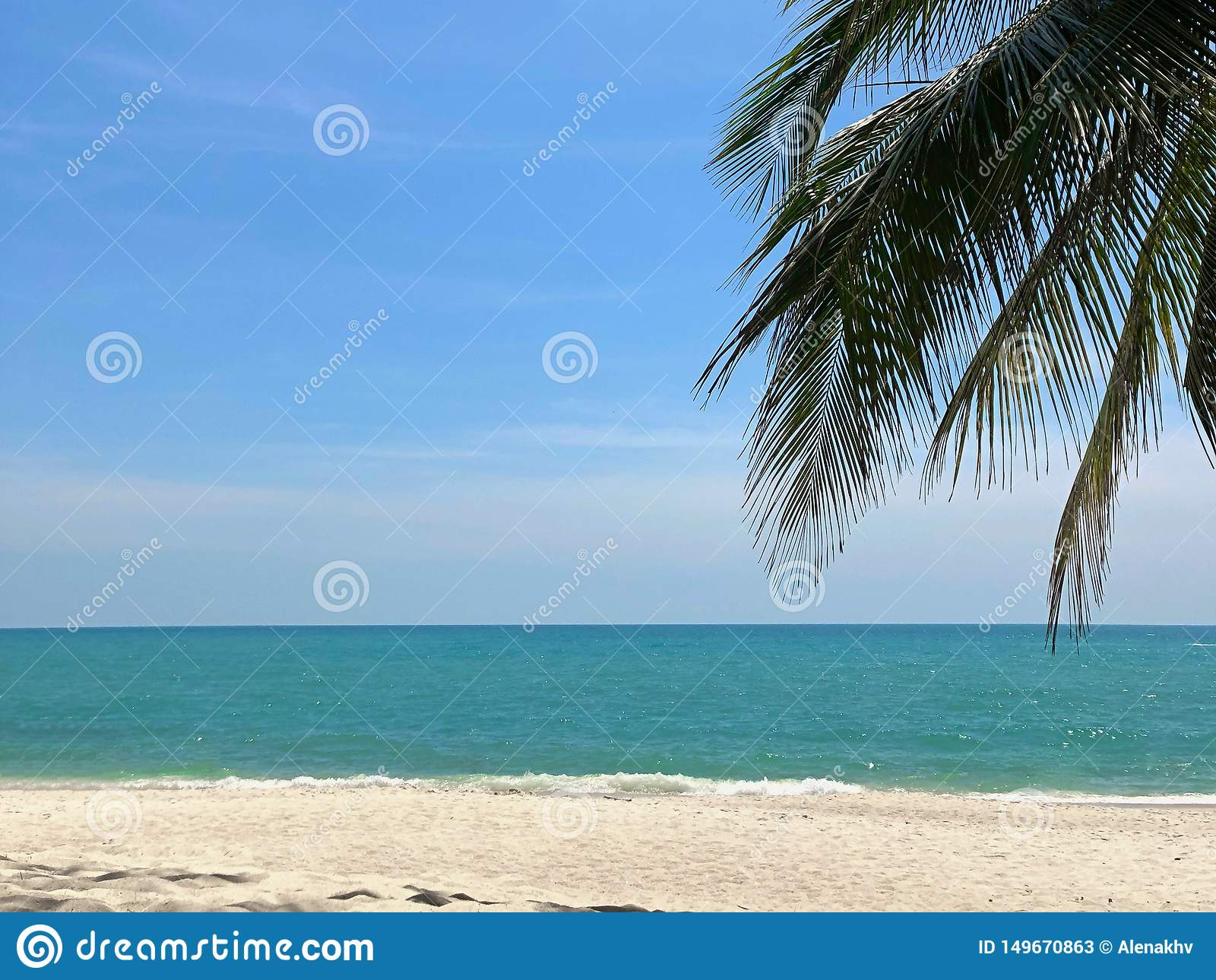 Palm branch against a blue sky, turquoise sea and white sand