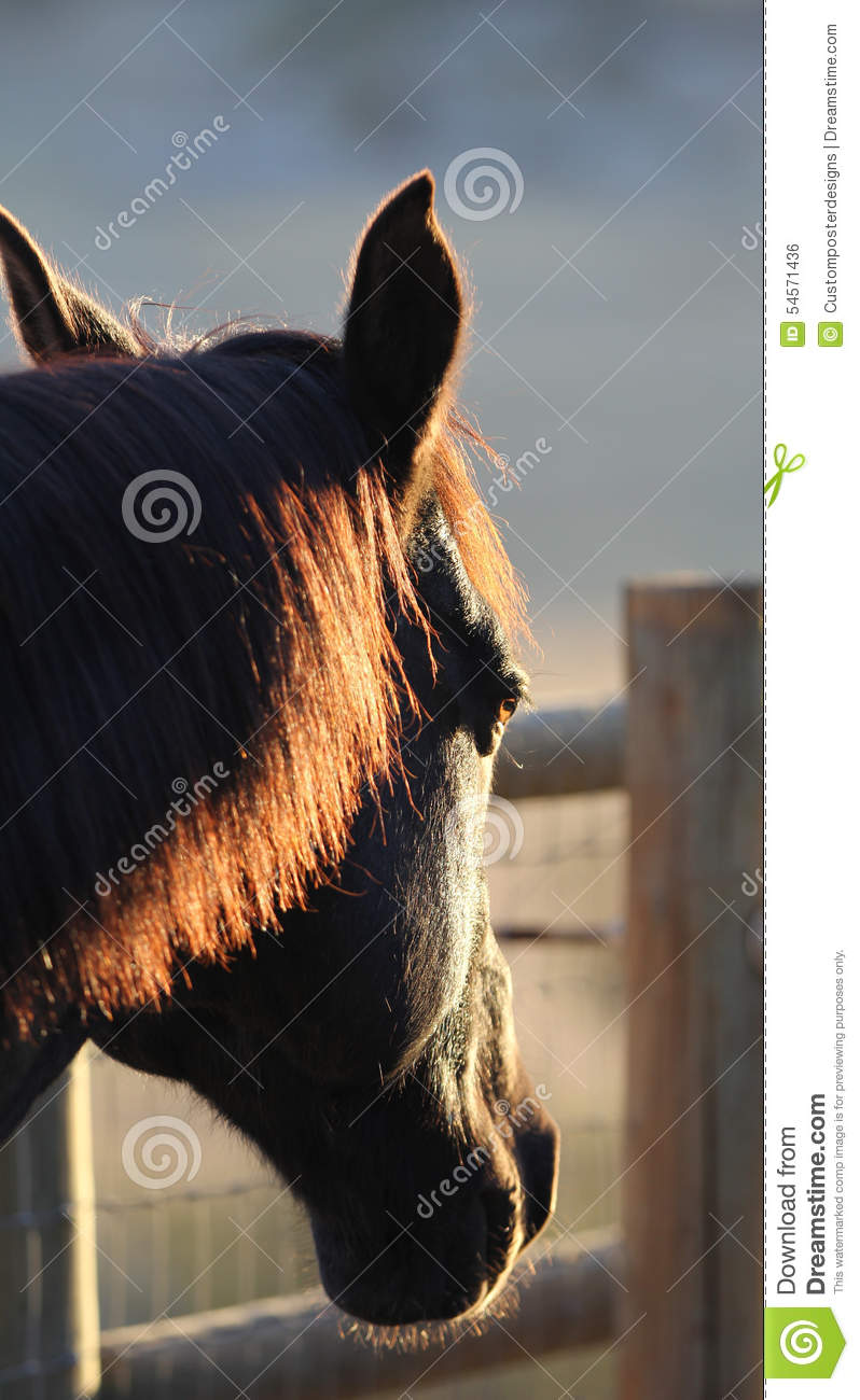 Download A Silhouette Of A Horse With A Red Mane. Stock Photo - Image of animals, horse: 54571436