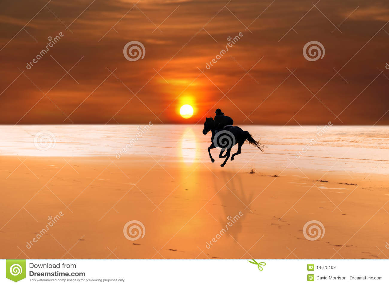 Silhouette Of A Horse And Rider Galloping Royalty Free Stock ...