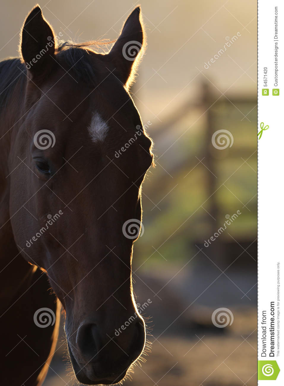 Download A silhouette of a horse. stock photo. Image of background - 54571420