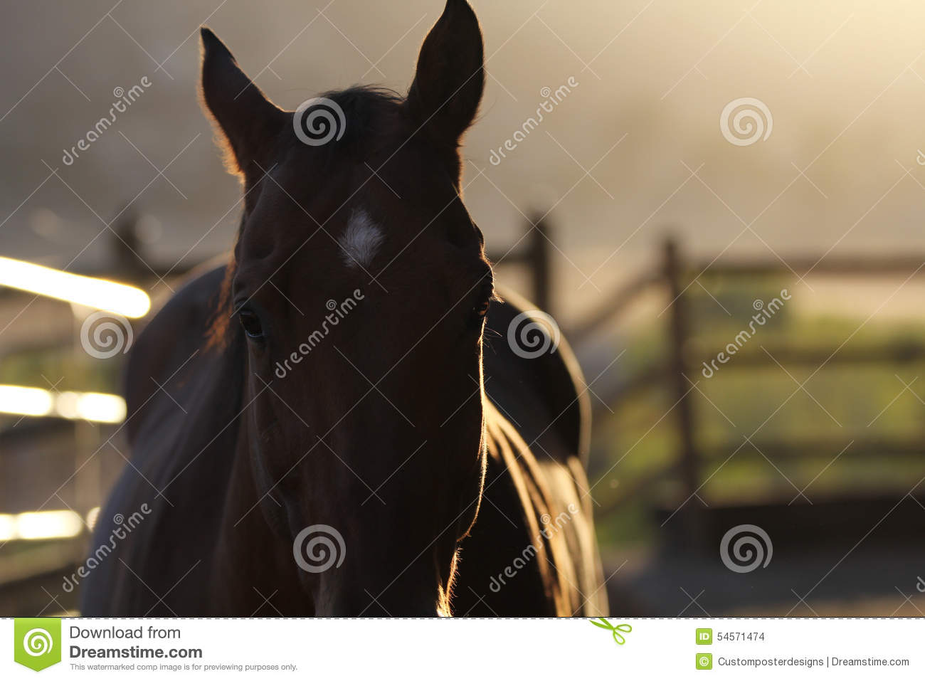 Download A silhouette of a horse. stock photo. Image of animal - 54571474