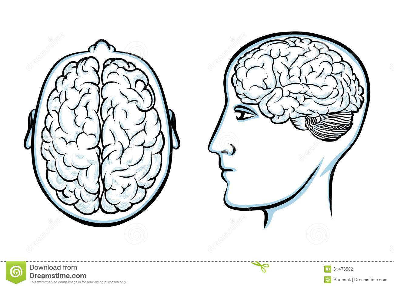 Silhouette Of A Human Head With Brain Stock Vector - Illustration of ...