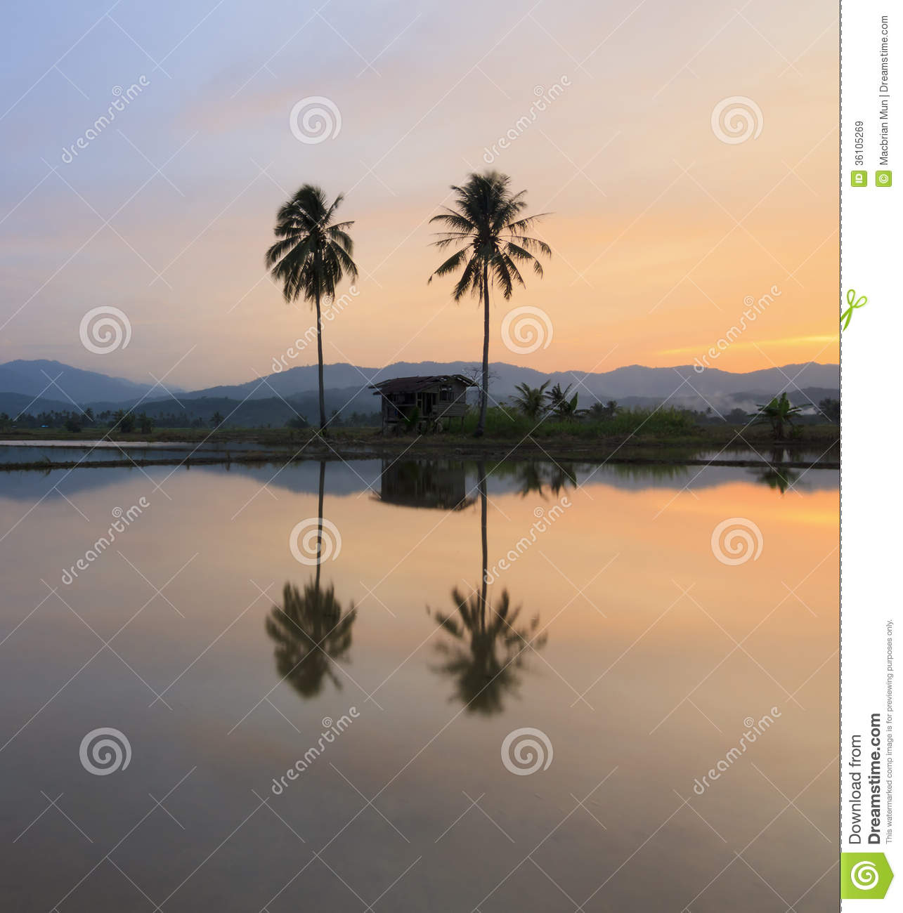 Beautiful Places In Malaysia With Description: Colorful Sunset With Palm Tree Silhouette-Malaysia Stock