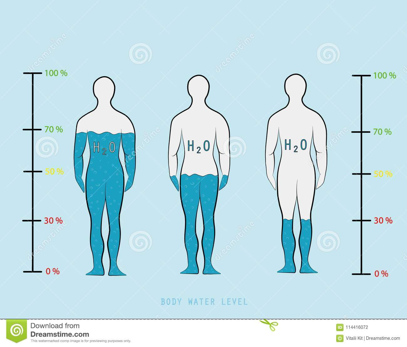 silhouette infographic showing water percentage level in human body vector illustration stock vector illustration of background body 114416072 https www dreamstime com silhouette infographic showing water percentage level human body vector illustration image114416072