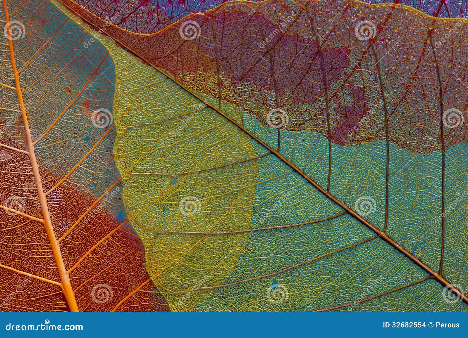Silhouette leaf three