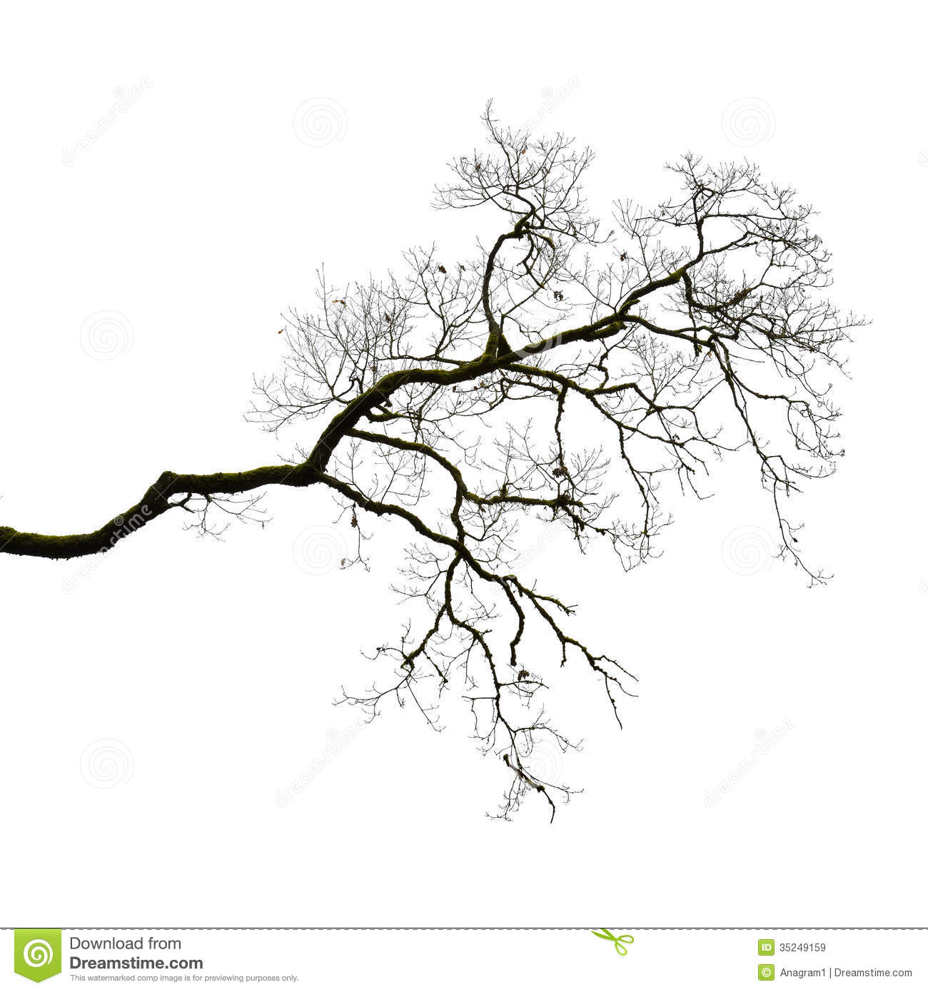 Silhouette of a leafless branch