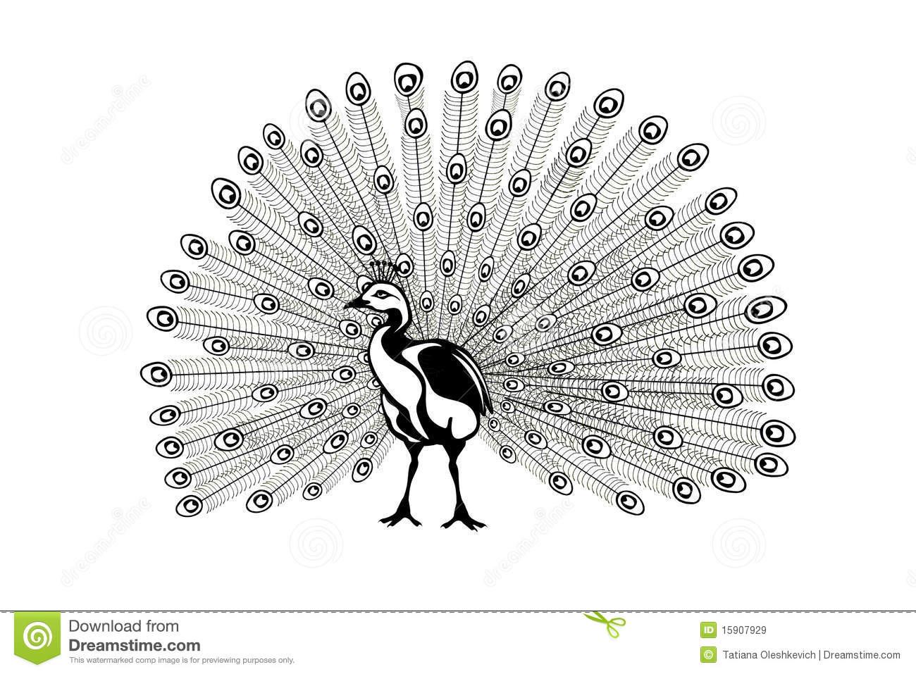 peacock images clip art