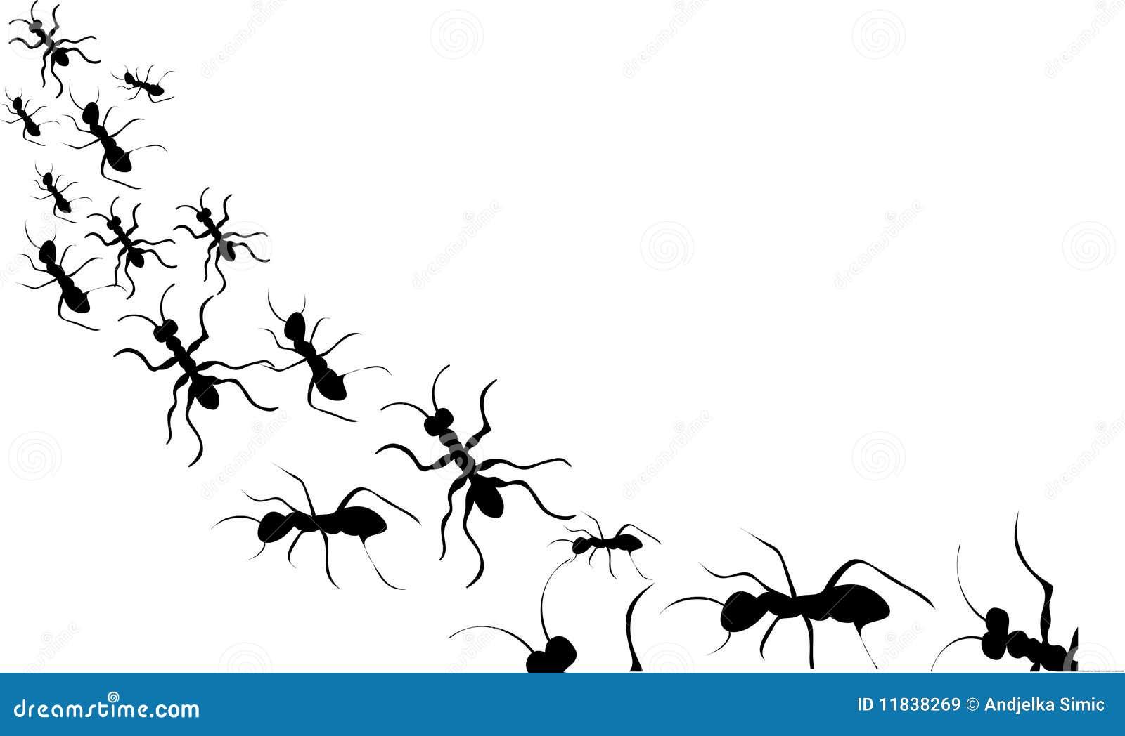 Silhouette noire de fourmis illustration de vecteur illustration du dessin piq re 11838269 - Dessin de fourmi ...